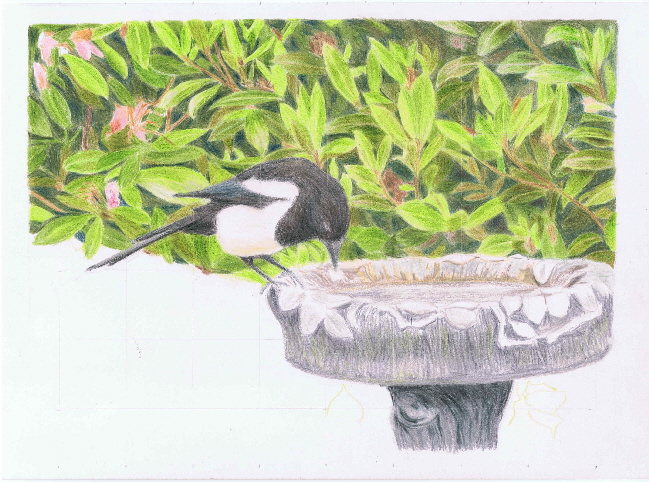 Magpie on bath WIP2